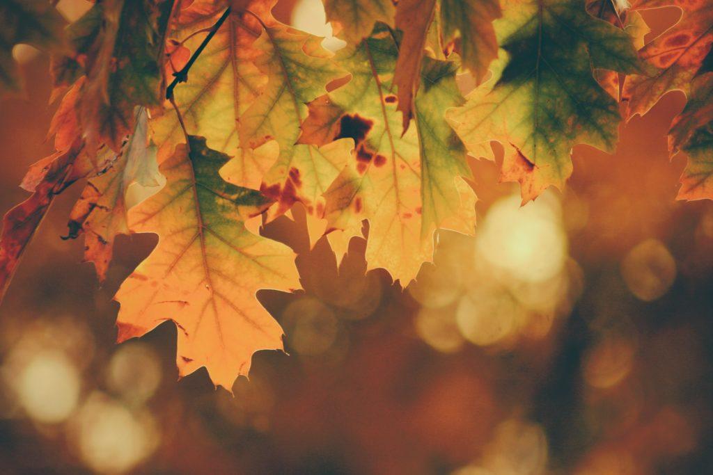 autumn-mabon-leaves
